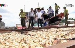 Ngư dân La Ngà vẫn chưa nhận được hỗ trợ bồi thường vụ cá chết