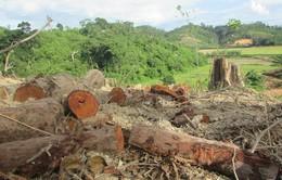 Liên tiếp 2 vụ hủy hoại rừng nghiêm trọng tại Đắk Lắk