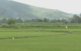 Khôi phục hàng trăm héc-ta đất sản xuất ở vùng hạn Quảng Ngãi