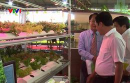 20 tỉnh, thành tham dự Hội chợ Triển lãm giống và nông nghiệp công nghệ cao TP.HCM