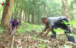 Nông lâm kết hợp để phát triển kinh tế và bảo vệ rừng