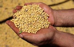 Trung Quốc chưa thể thay thế nguồn cung đậu nành Mỹ