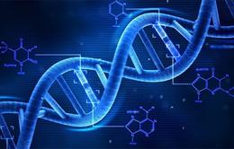 Xác định được trên 900 gen liên quan trí thông minh