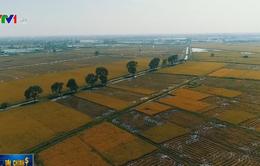 Hà Nội thu hút doanh nghiệp đầu tư vào nông nghiệp
