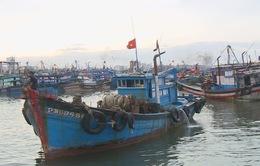 Đà Nẵng: Tàu thuyền vào âu thuyền Thọ Quang trú ẩn an toàn trước diễn biến áp thấp nhiệt đới