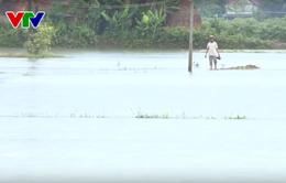 Hàng nghìn héc-ta lúa Hè Thu tại miền Trung bị ngập nước do mưa lớn