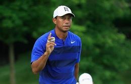 Tiger Wood cải thiện vị trí trên BXH Golf thế giới