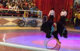 Không dùng động vật hoang dã biểu diễn xiếc