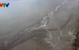 Bình Định: Bãi biển Quy Nhơn xuất hiện bùn đen