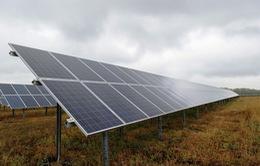 Ngành năng lượng mặt trời Mỹ thiệt hại 2,5 tỷ USD