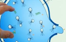 Phát hiện protein giúp chống vi khuẩn kháng thuốc