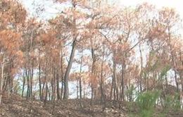Khẩn trương vào cuộc điều tra nguyên nhân 4 vụ cháy rừng tại Thừa Thiên Huế