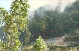 Khắc phục hậu quả cháy rừng tại Hà Tĩnh