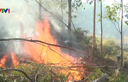 Liên tiếp cháy rừng ở Hà Tĩnh và Nghệ An