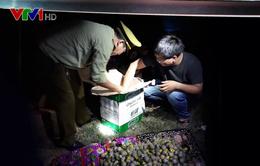 Thu giữ gần 200kg pháo lậu tại Nghệ An
