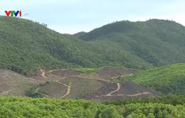Hà Tĩnh: Chủ động phòng, chống cháy rừng mùa nắng nóng