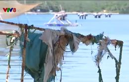 Giao mặt nước cho người nuôi tôm hùm Phú Yên