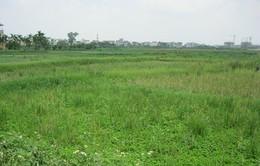 Thủ tướng đồng ý cho TP.HCM chuyển 26.000ha đất nông nghiệp
