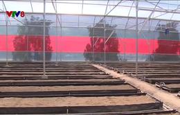 Miền Trung : Khó giải bài toán thu hút đầu tư nông nghiệp ứng dụng công nghệ cao