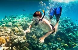 Lặn biển ngắm san hô Cù Lao Chàm, xóa tan cái nóng ngày hè