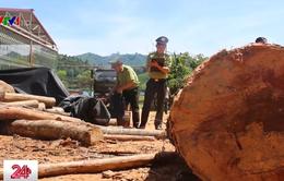 Phát hiện thêm 3 vụ phá rừng ở Bắc Quang, Hà Giang