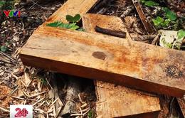 Hà Giang tăng cường ngăn chặn tình trạng phá rừng trái phép