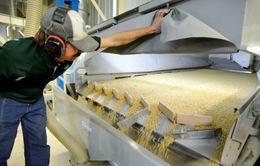 Giá đậu tương tại Mỹ chạm đáy trong 10 năm