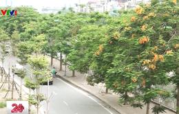 Hà Nội: Lãng mạn với những hàng cây mới xanh mướt