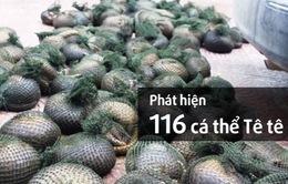 Phát hiện 116 cá thể tê tê tại Hưng Yên