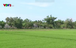 Thừa Thiên Huế tăng cường nguồn nước phục vụ sản xuất