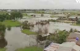 TP.HCM: Hàng chục ha đất sản xuất bị ngập nước vì một hộ dân lấp cống
