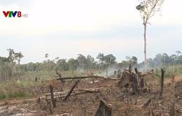 Lợi ích kinh tế từ bảo vệ và phát triển rừng
