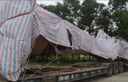 """Quảng Ngãi: Cảnh sát giao thông bắt ô tô chở cây """"khủng"""" cố thủ"""