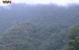 Quảng Nam tìm biện pháp giao khoán bảo vệ rừng