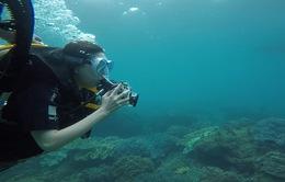Đi lặn để thêm yêu biển Việt Nam