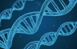 Phát hiện gen mới góp phần điều trị bệnh ung thư và nhiều bệnh khác