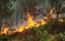 Nghệ An dập tắt vụ cháy lớn rừng thông tại Khánh Sơn