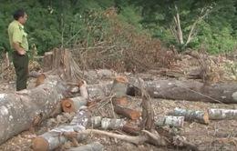 Đắk Lắk: Điều tra làm rõ vụ phá rừng tại huyện Krông Ana