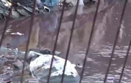 Đồng Nai: Hàng chục lò mổ không phép gây ô nhiễm