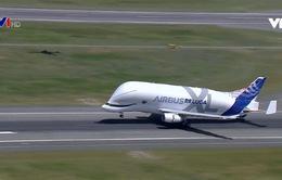 Chiêm ngưỡng máy bay cá voi trắng khổng lồ của Airbus