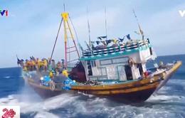 Giã cào bay hoành hành trên vùng biển Tuy Phong, Bình Thuận