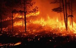 Mỹ: Bang California ban bố tình trạng khẩn cấp do cháy rừng lan rộng