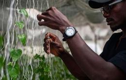 Thế hệ nông dân mới ở Nigeria