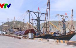 Công ty TNHH Đại Nguyên Dương chây ì tiền hỗ trợ cho ngư dân Bình Định