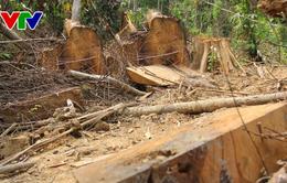 Quảng Nam: Khiển trách Chủ tịch xã Tà Lu, huyện Đông Giang vì để mất rừng
