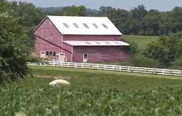 Gói 12 tỷ USD hỗ trợ lĩnh vực nông nghiệp tại Mỹ: Chưa làm nông dân yên tâm!
