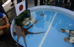 ĐT Nhật Bản thua đau trước ĐT Bỉ vì một con… bạch tuộc?