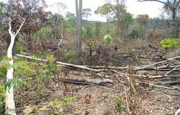 Tình trạng mua, bán đất rừng trái phép ở Đắk Lắk diễn biến phức tạp