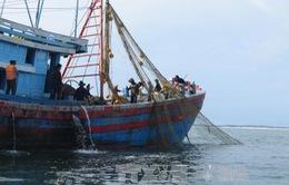 Nhiều sai phạm trong đánh bắt hải sản