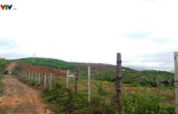 Đắk Lắk: Đất rừng phòng hộ ở Krông Năng bị lấn chiếm